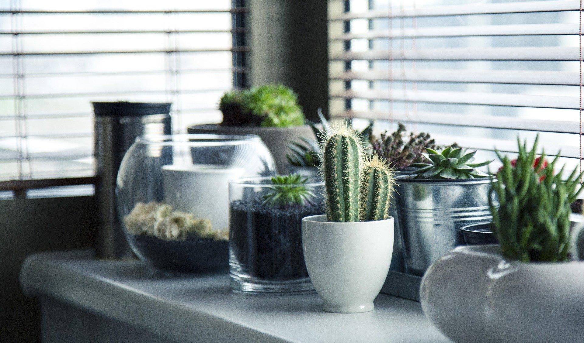 plantes intérieures arrosage