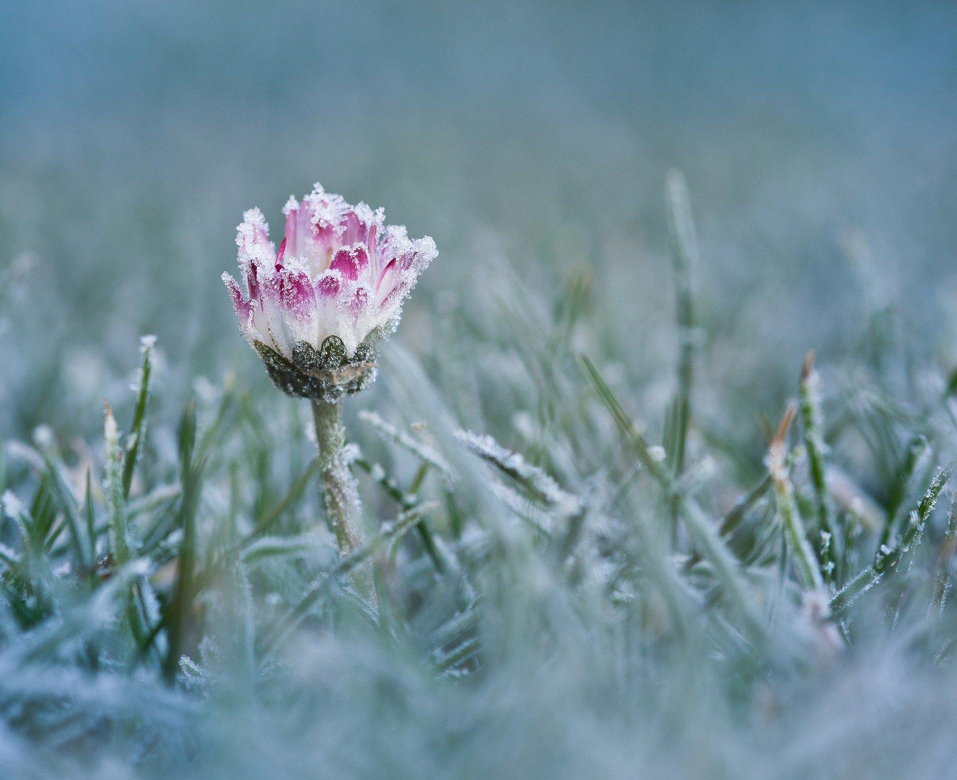 plantes floraison hivernale