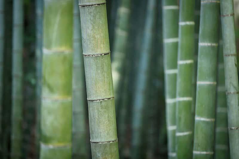 comment bien choisir sa jardiniere pour bambou