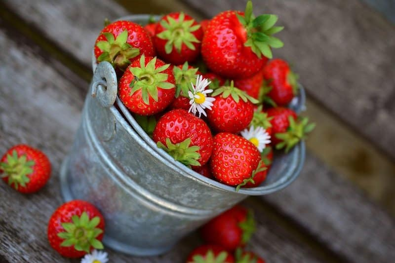 bien choisir sa jardiniere pour fraisiers