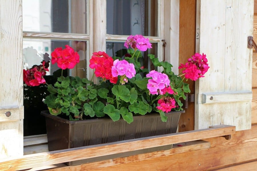 choisir ses plantes pour jardiniere